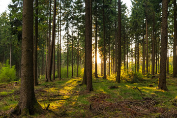 Sunset in a spring forest in Germany