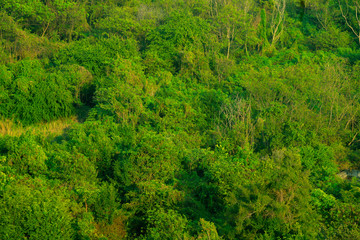 Forest and tree from the top view