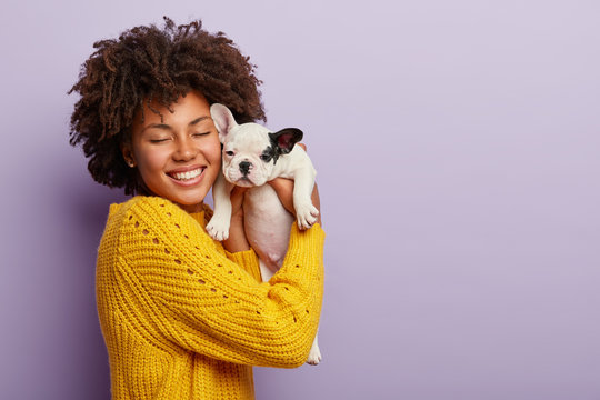 Charming happy woman of Afro appearance expresses positive emotions during photoshoot with french bulldog puppy, cuddles gently near face, smiles broadly, laughs at camera, blank space aside