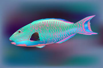 Parrotfish, vector illustration sea pink pink blue