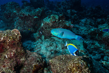 Keuken foto achterwand Koraalriffen diving the Maldives