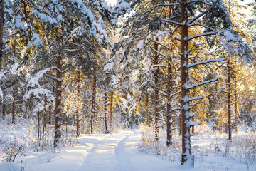 Walking path in the forest, Imatra, Finland