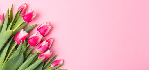 Spring Summer pink background with spring flowers. Free space. Copy space.Top view. Tulips.