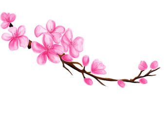 blossom pink flower illustration