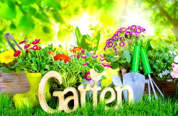 Gartenzeit Blumen Hintergrund Natur