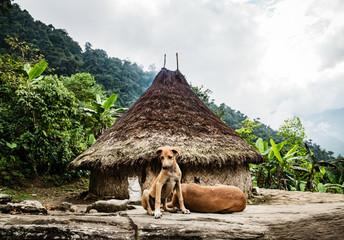 Dogs near straw hut against cloudy sky