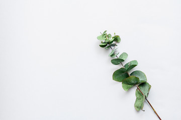 green leaves on white background. flat lay, top view. place for text