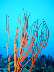 Amazing underwater world - Red Sea, Egypt.