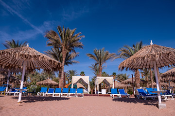 blue sky on the background of palm trees and parasols. advertising space
