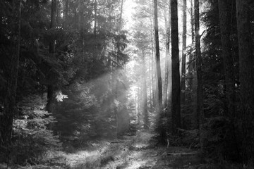 A lightened path in the forest