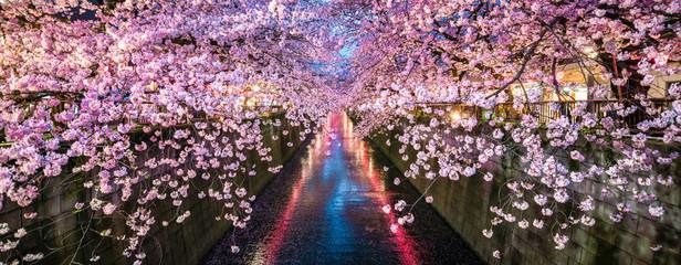 Kirschblüte im Frühling bei Nacht in Nakameguro, Tokio, Japan Wall mural