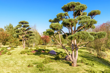 Park with gardens in modern town. Scenic conifer trees in natural public place. Green park with landscape design on sunny summer day. Panorama of landscaped area near residential houses.
