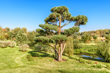 Park with gardens in modern town. Scenic conifer tree in natural public place. Green park with landscape design on sunny summer day. Panorama of landscaped area near residential houses.