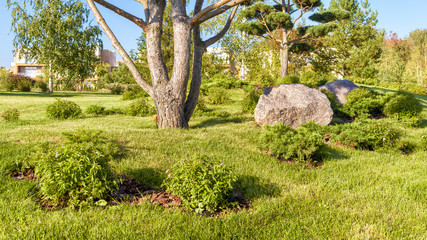 Landscape design in modern town close-up. Scenic conifer tree with flowers and stones in natural public park. Panorama of the beautiful landscaped area with gardens near residential houses in summer.