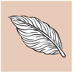 Vector illustration of a black and white leaf
