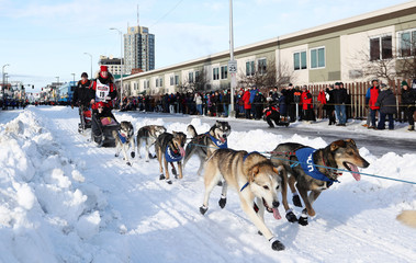 Aliy Zirkle and her dogs head out at the ceremonial start of the 47th Iditarod Trail Sled Dog Race in Anchorage