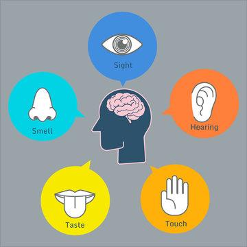 Colorful five human senses illustration infographic presentation