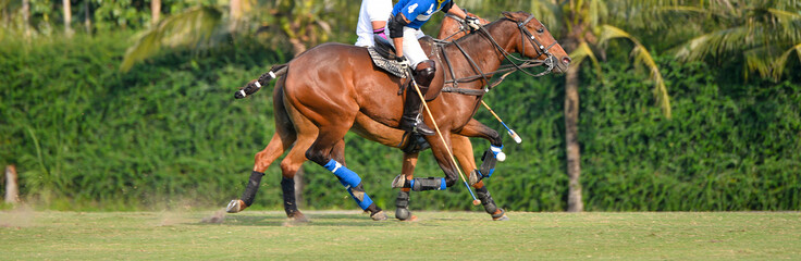 polo player and horse polo sport on the polo field.