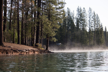 Misty Lake in the Forest