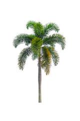 Palm tree Ornamental plants  beautiful on white background