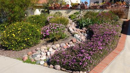 Wall Murals Garden Drought tolerant plants in yard