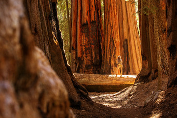 Hiker in Sequoia national park in California, USA Fototapete