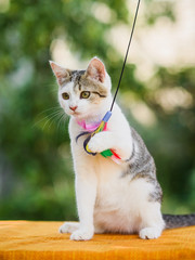 cat holding feather toy by paws, claws released