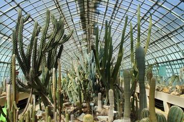 cactus en serre