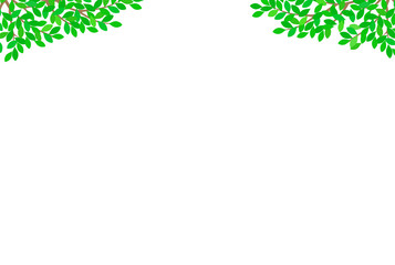 新緑イメージ 背景