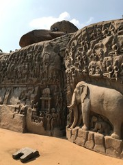Elephant Stone Carving of Hindu Story in Mahabaripuram, India