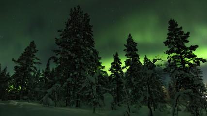 Aurora borealis (northern light) behind trees outside Saariselka village on a winter night. Northern Lapland, Finland.