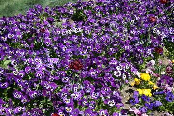 Park, Krasnodar, Russia, flower, nature, flowers, garden, plant, pink, spring, purple, green, blossom, floral, bloom, summer, violet, flora, field, beauty, color, beautiful, colorful, petal, meadow, b