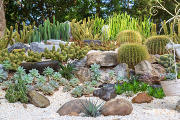 Cactus in garden Wall mural