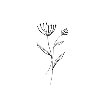 Hand drawn vector minimalistic botanical element in graphic style isolated on white background.