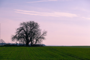 tree silhouette in the middle of a green field against a purple sky