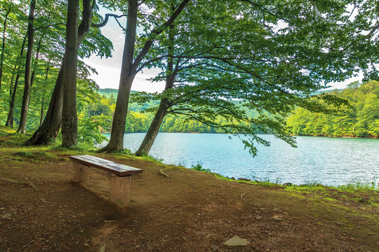 bench near in forest on the shore mountain lake. beech trees. sunny summer afternoon
