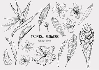 Tropical flowers. Set of hand drawn illustrations. Vector. Isolated