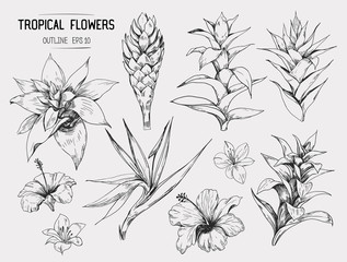 Wall Mural - Tropical flowers. Set of hand drawn illustrations. Vector. Isolated