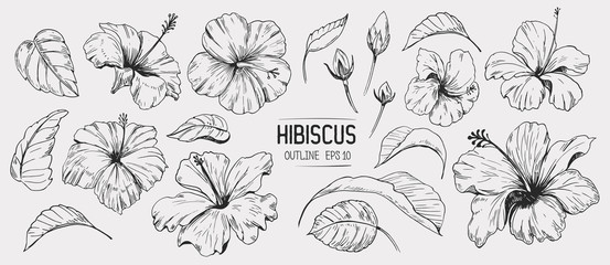 Hibiscus flower. Set of hand drawn illustration. Vector outline. Isolated Fototapete