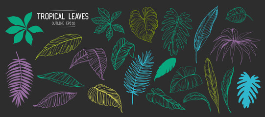 Wall Mural - Tropical leaves. Set of hand drawn illustration. Vector. Isolated