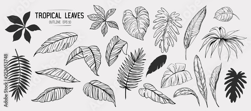 Wall mural Tropical leaves. Set of hand drawn illustration. Vector. Isolated