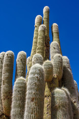 View on cactus plants in Argentina