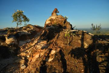 Dog on the rocks in Brazil