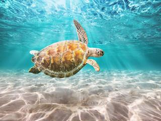 Sea Turtle swiming in underwater