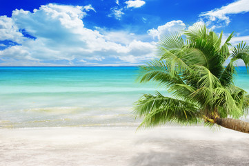 Wall Mural - coconut plam trees on island and sandy beach summer concept