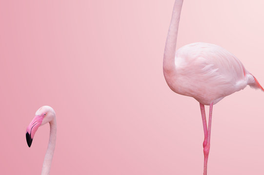 abstract flamingo half body on pink background