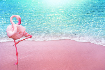 Wall Mural - pink flamingo bird sandy beach and soft blue ocean wave summer concept background