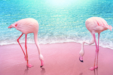 Poster Flamingo pink flamingo on pink sandy beach and soft blue ocean wave summer concept background