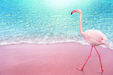 pink flamngo bird sandy beach and soft blue ocean wave summer concept background