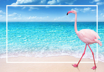 Foto auf Leinwand Flamingo flamingo on sandy beach and soft blue ocean wave summer concept background